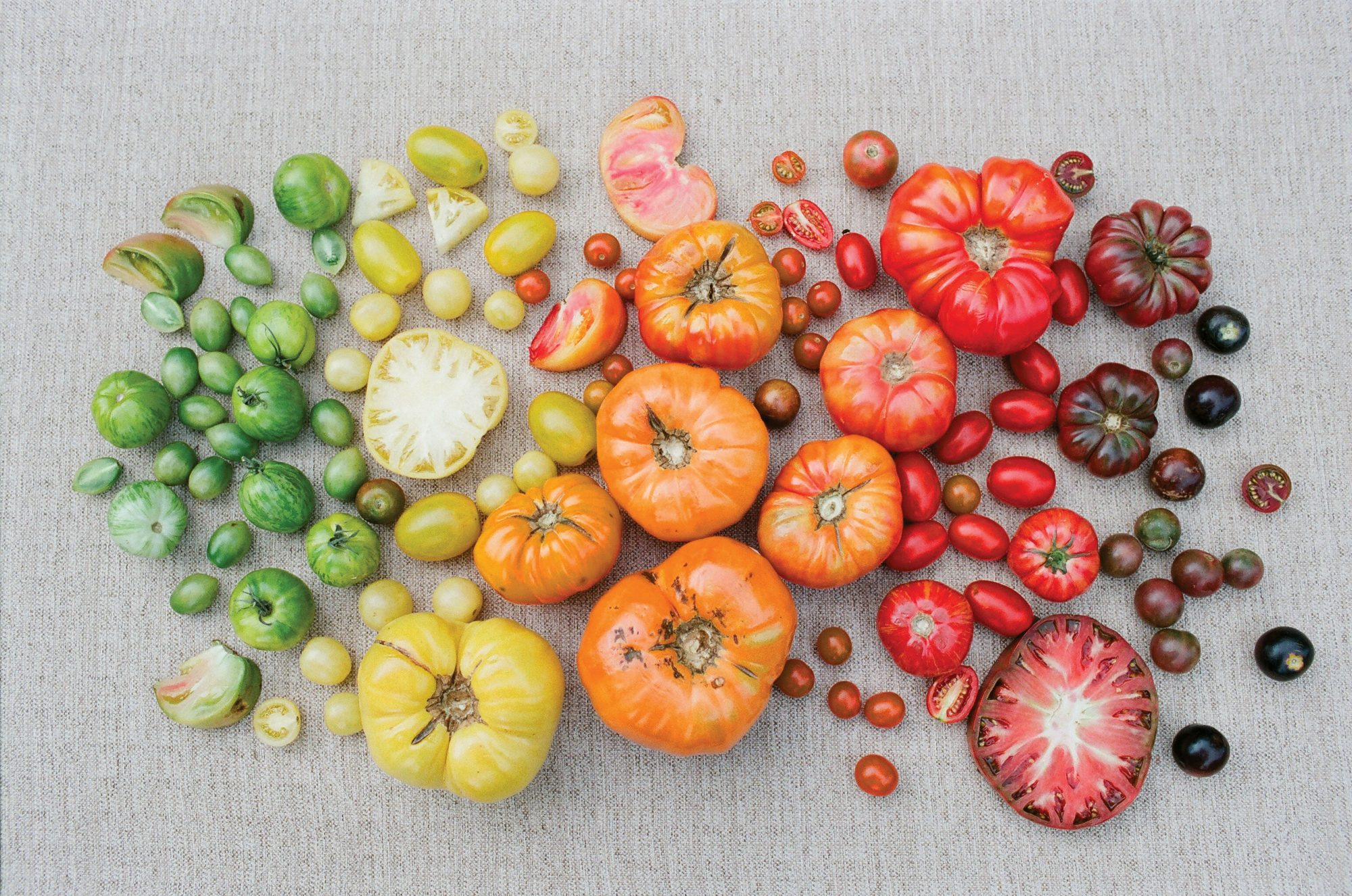 Heirloom Tomato Shades