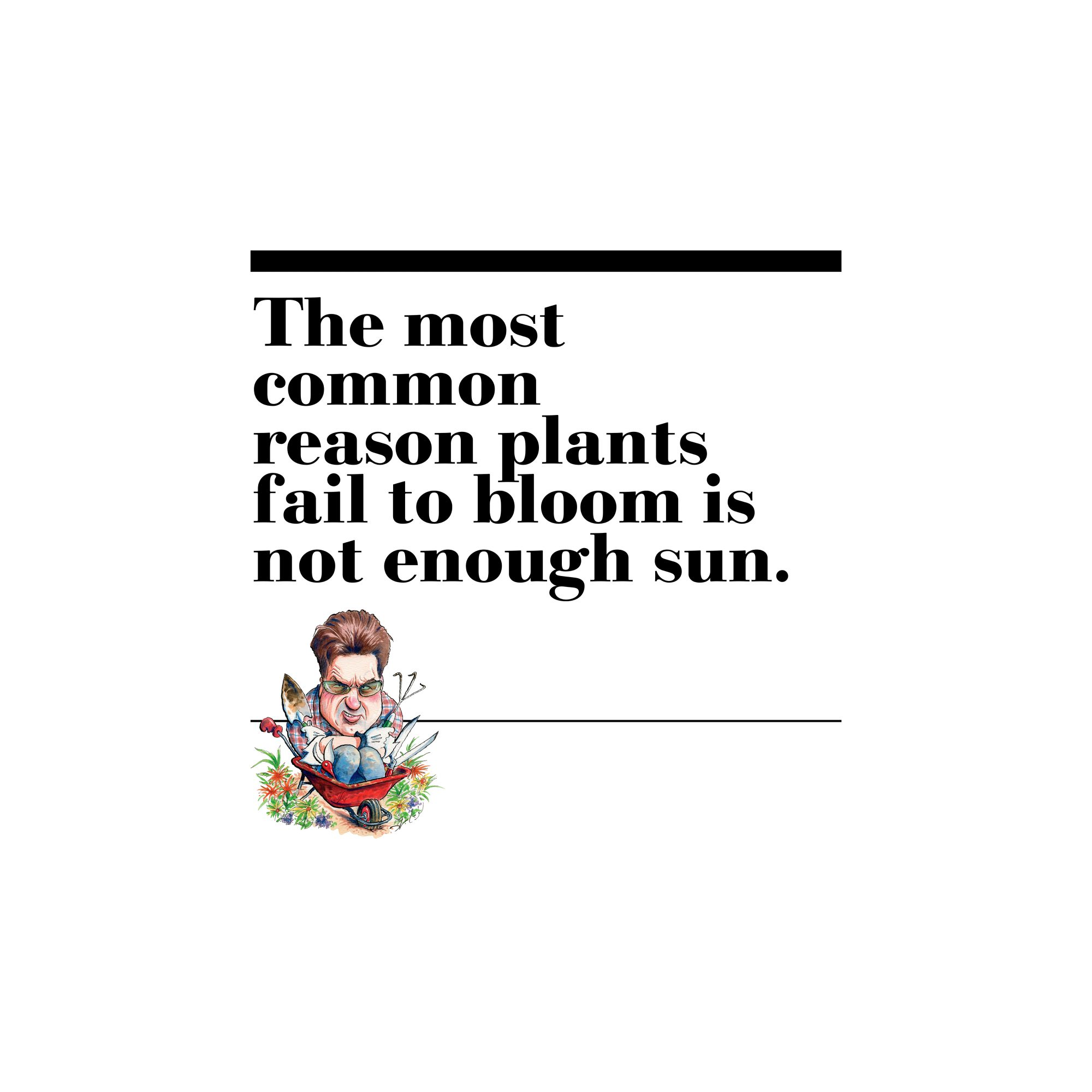 10. The most common reason plants fail to bloom is not enough sun.