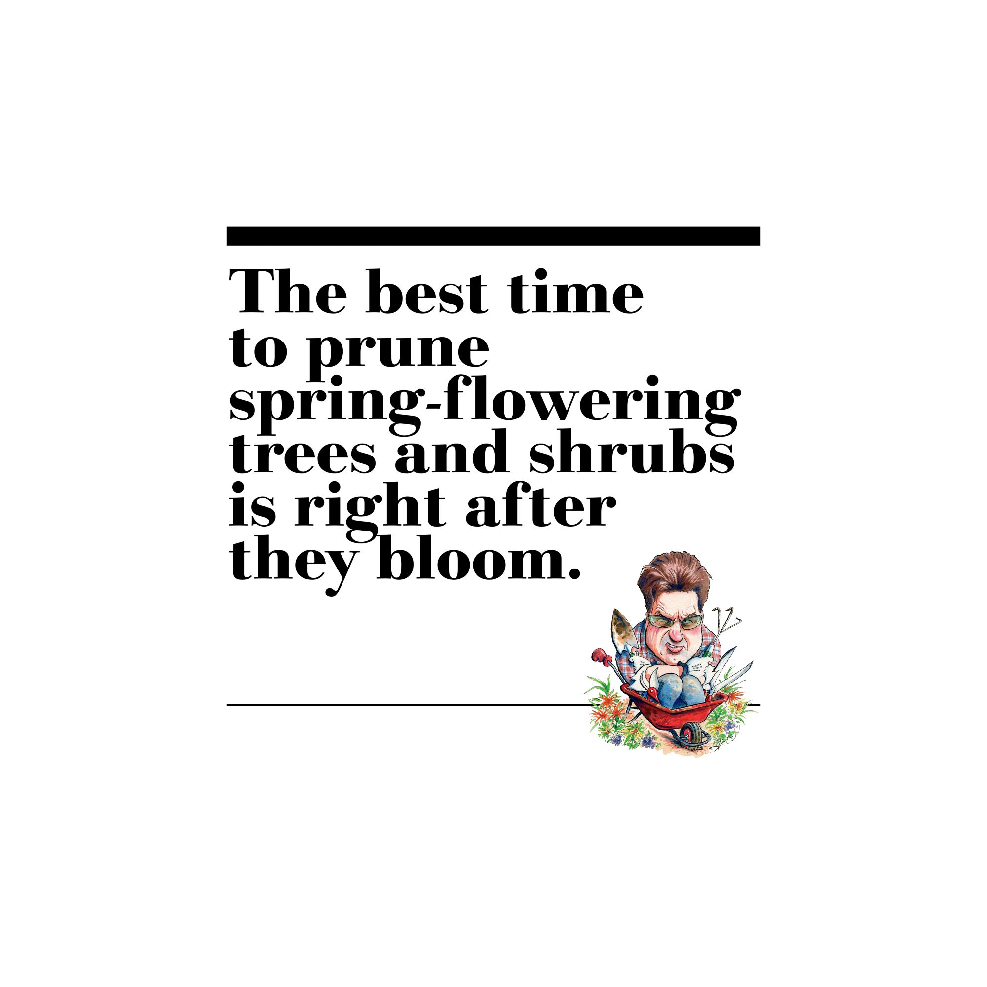 3. The best time to prune spring-flowering trees and shrubs is right after they bloom.