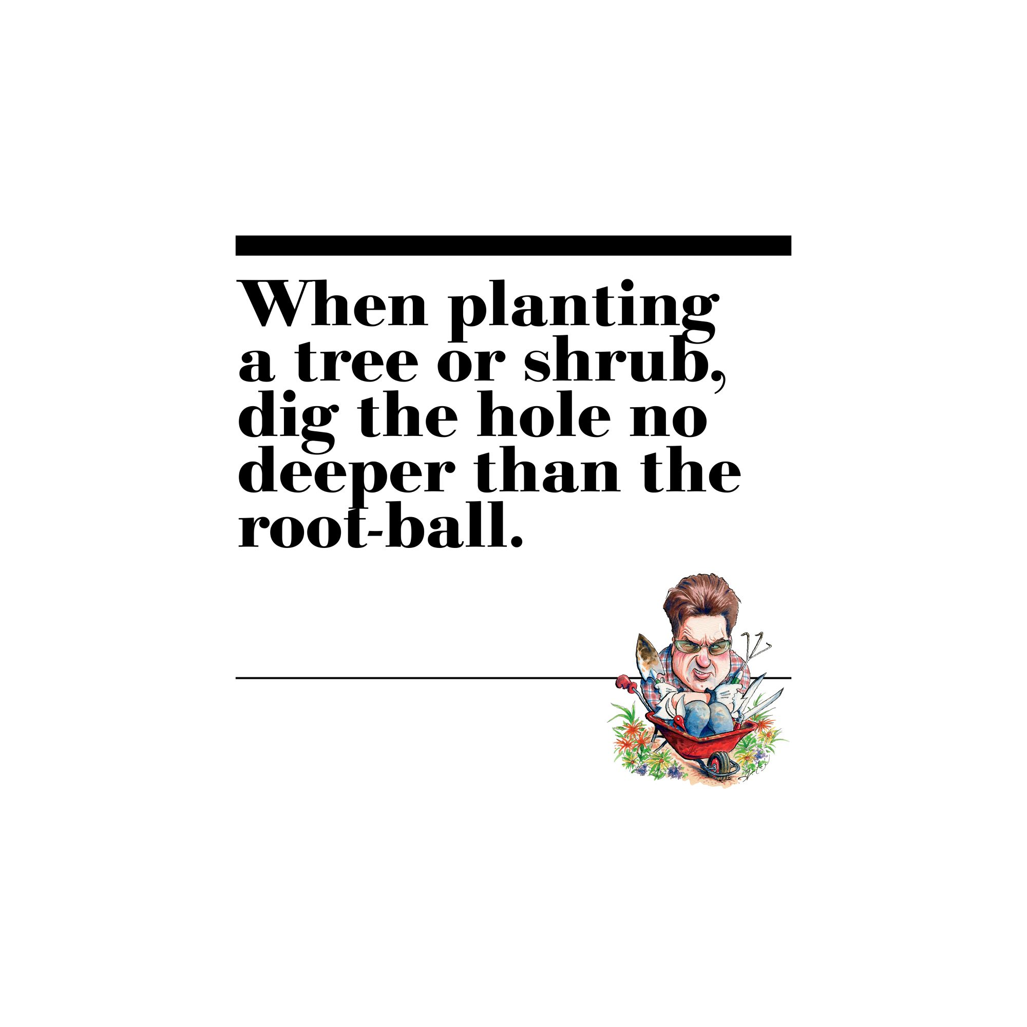 45. When planting a tree or shrub, dig the hole no deeper than the root-ball.