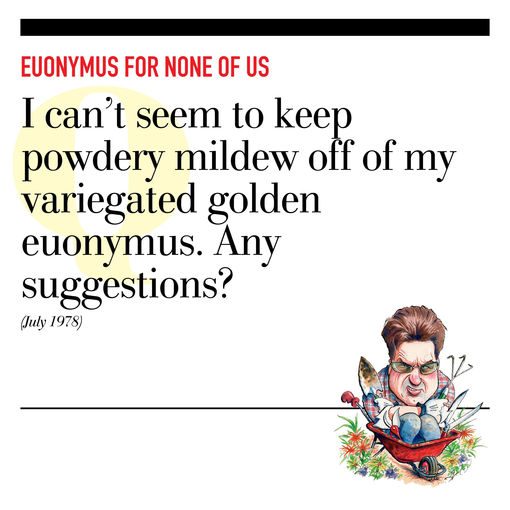 Euonymus for None of Us