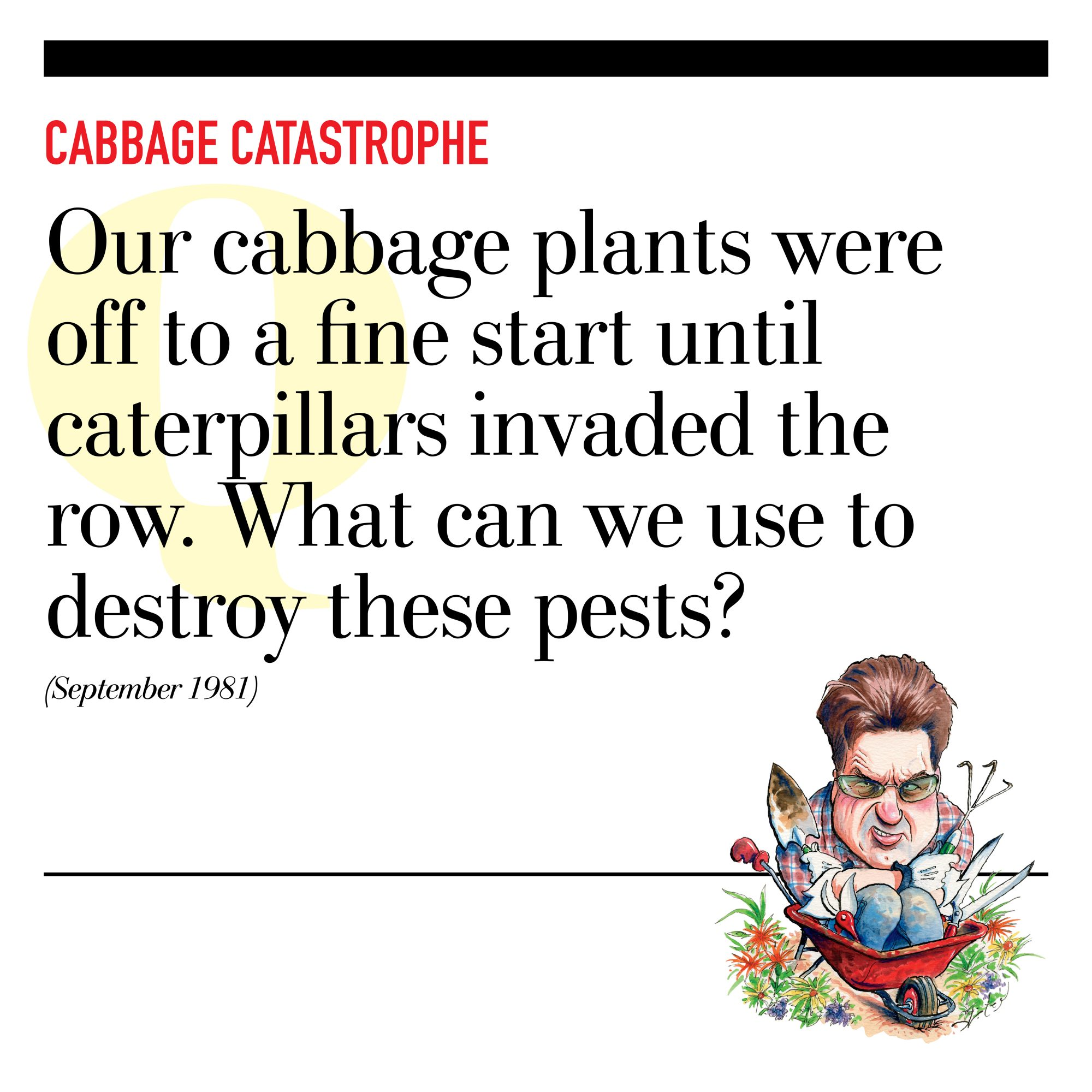 Cabbage Catastrophe