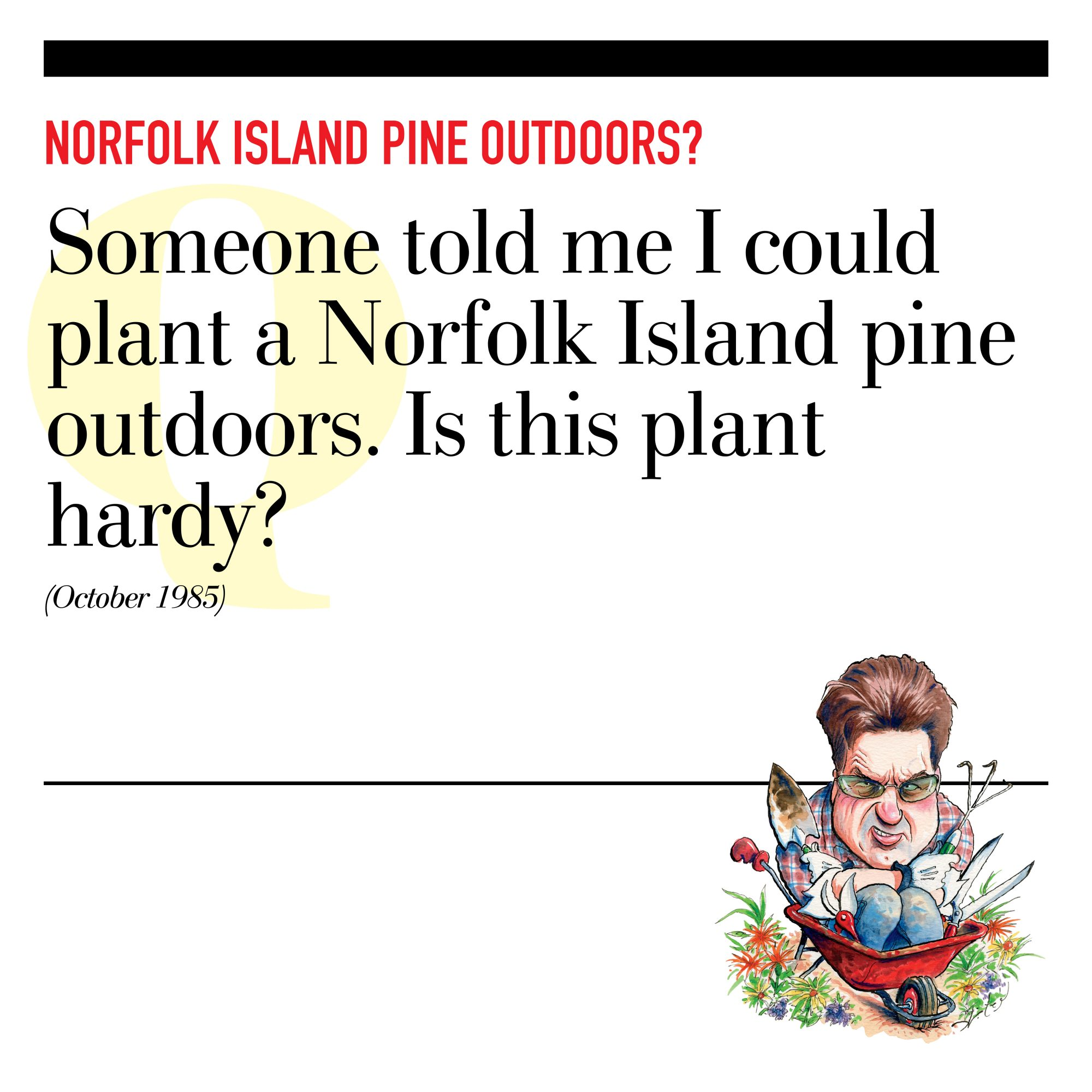 Norfolk Island Pine Outdoors?