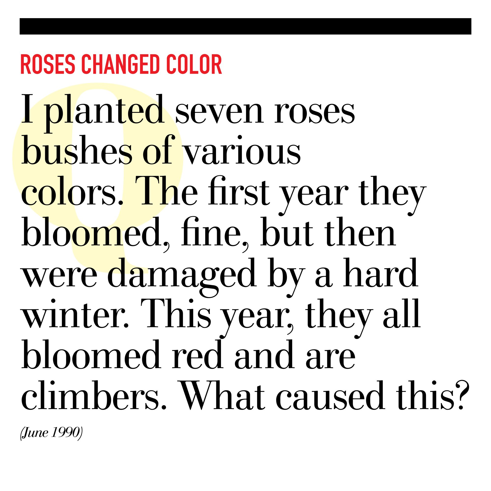 Roses Changed Color