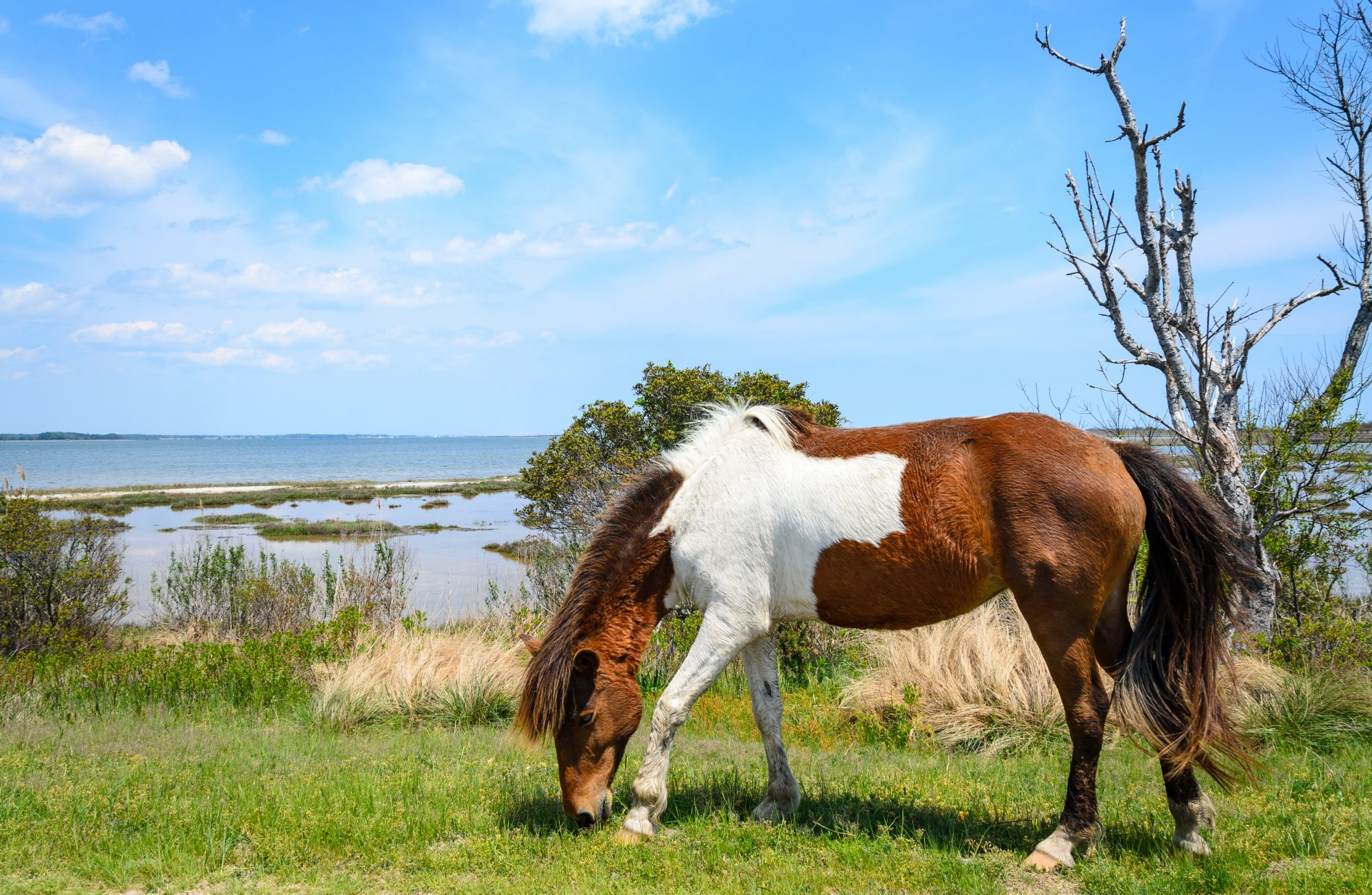 Assateague Island (Maryland)