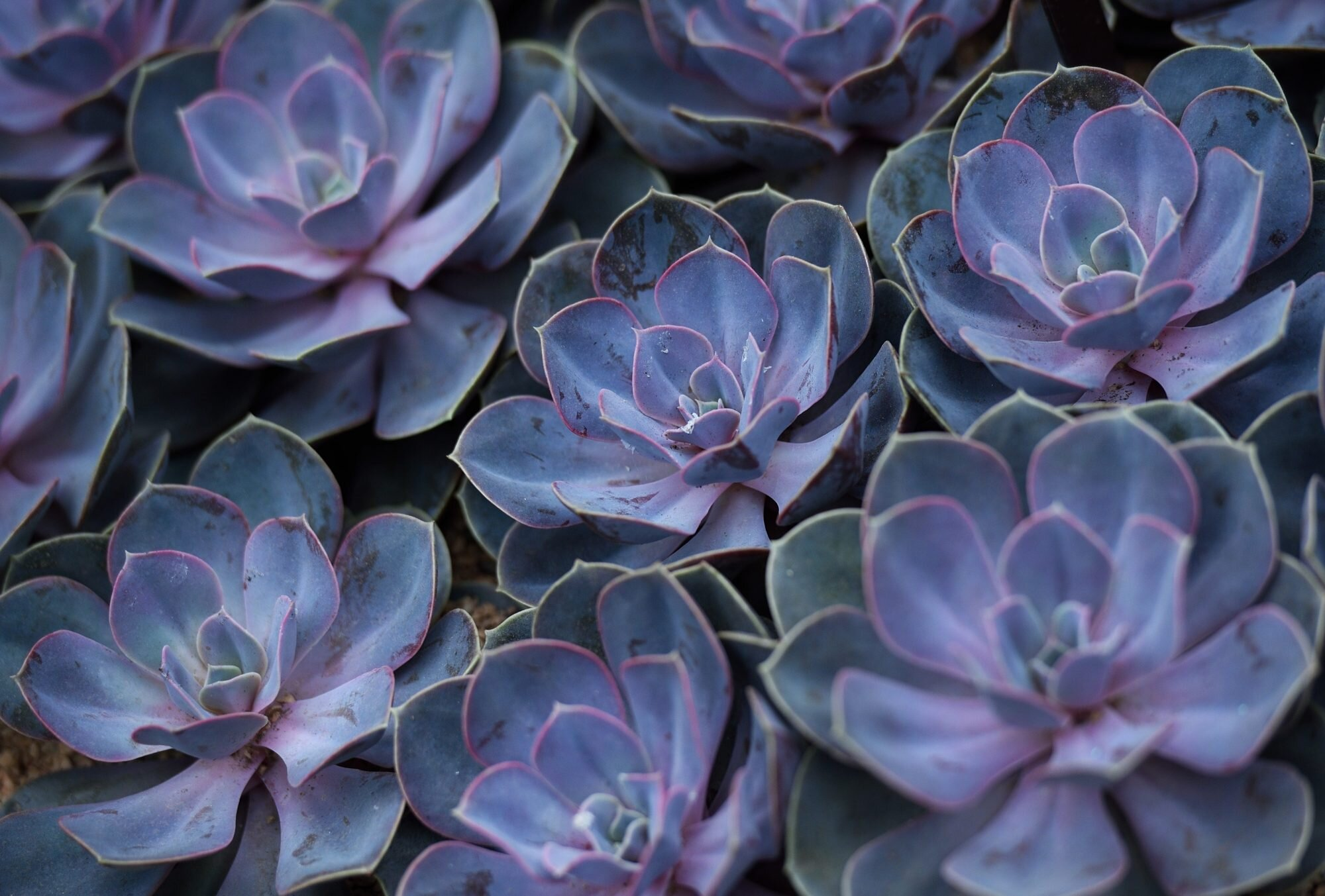 Succulent Care Tips On Buying And Growing Beautiful Succulents