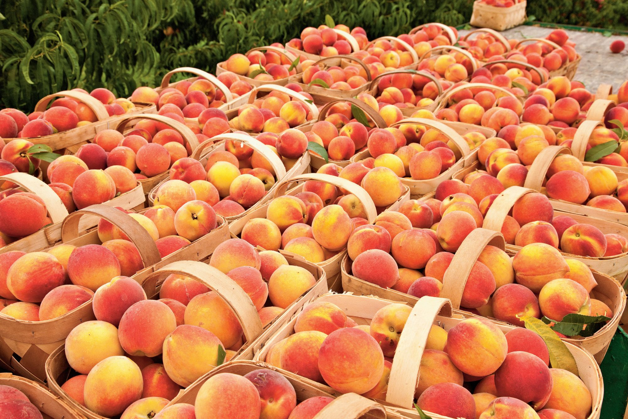 This is The Very Best Way to Freeze Peaches