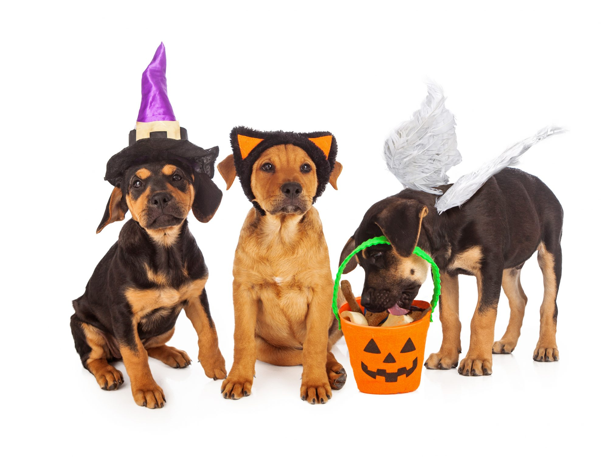 3 dogs dressed in costume for halloween
