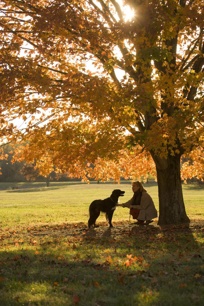 dog by tree in fall