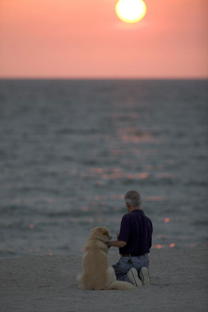 Dog on beach with sunset