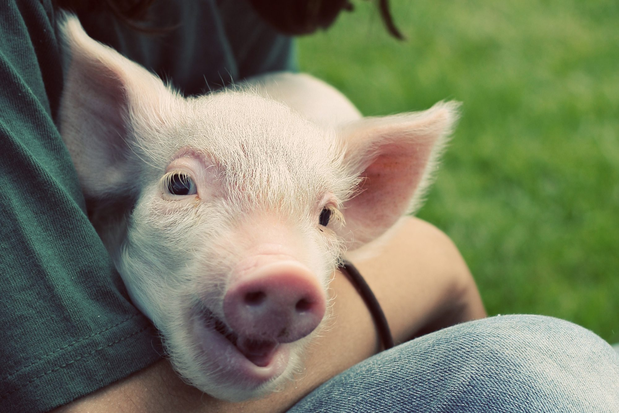 person holding pink pig