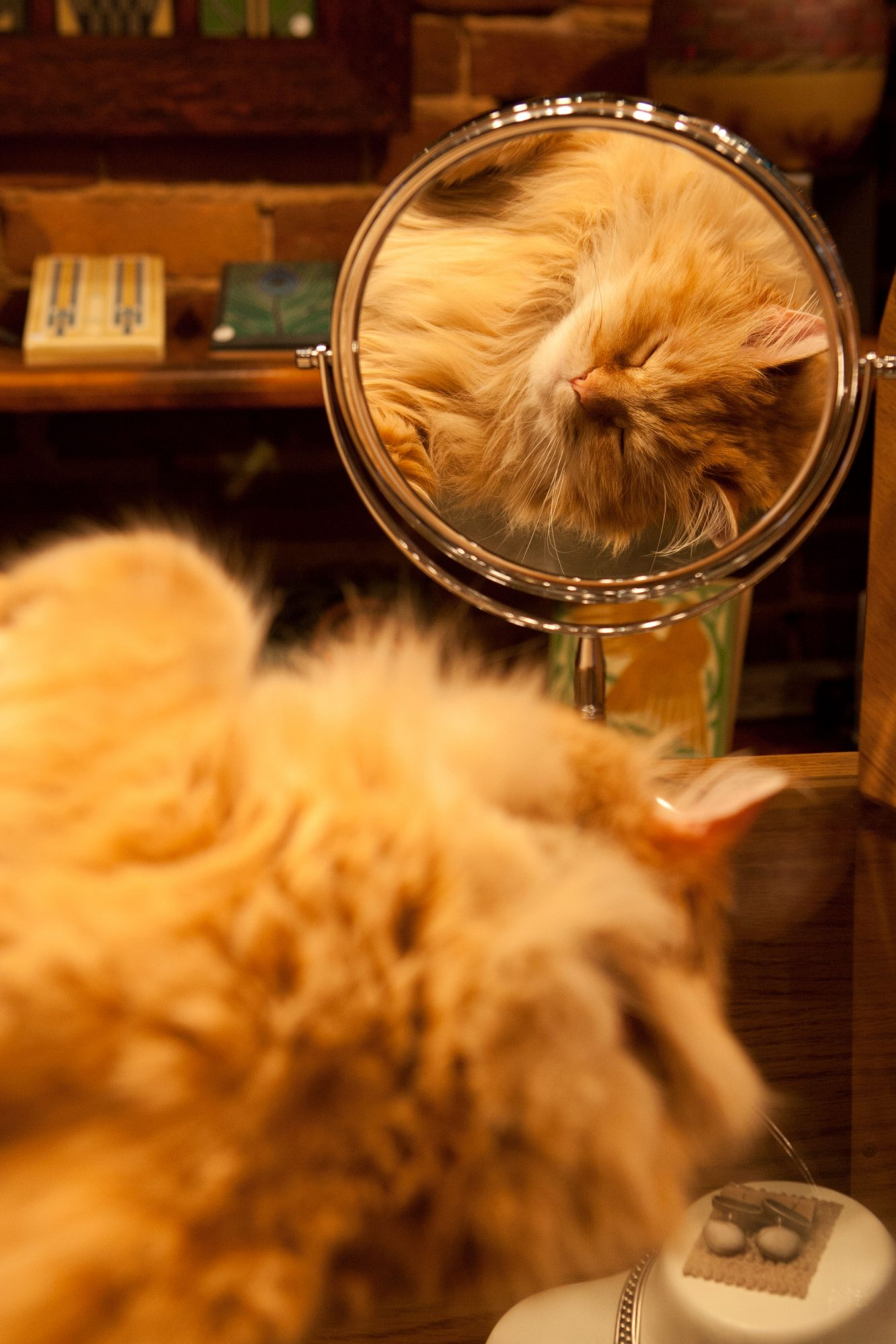 Orange Cat Looking in Mirror
