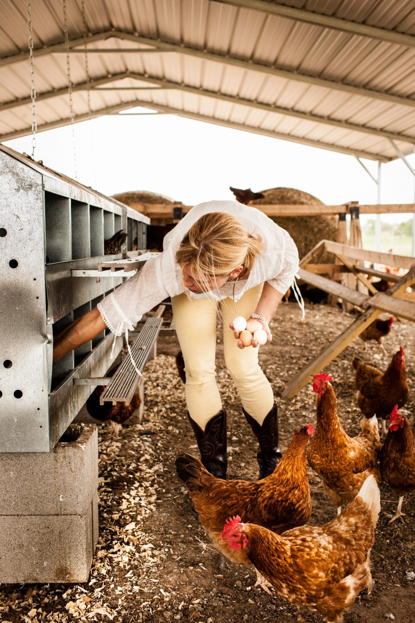 Peeler Farms. Woman (Marianna Peeler) is gathering eggs in chicken coop.