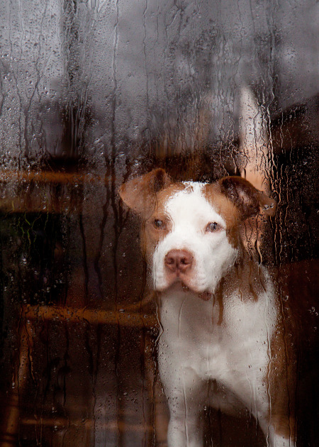 Dog During Storm