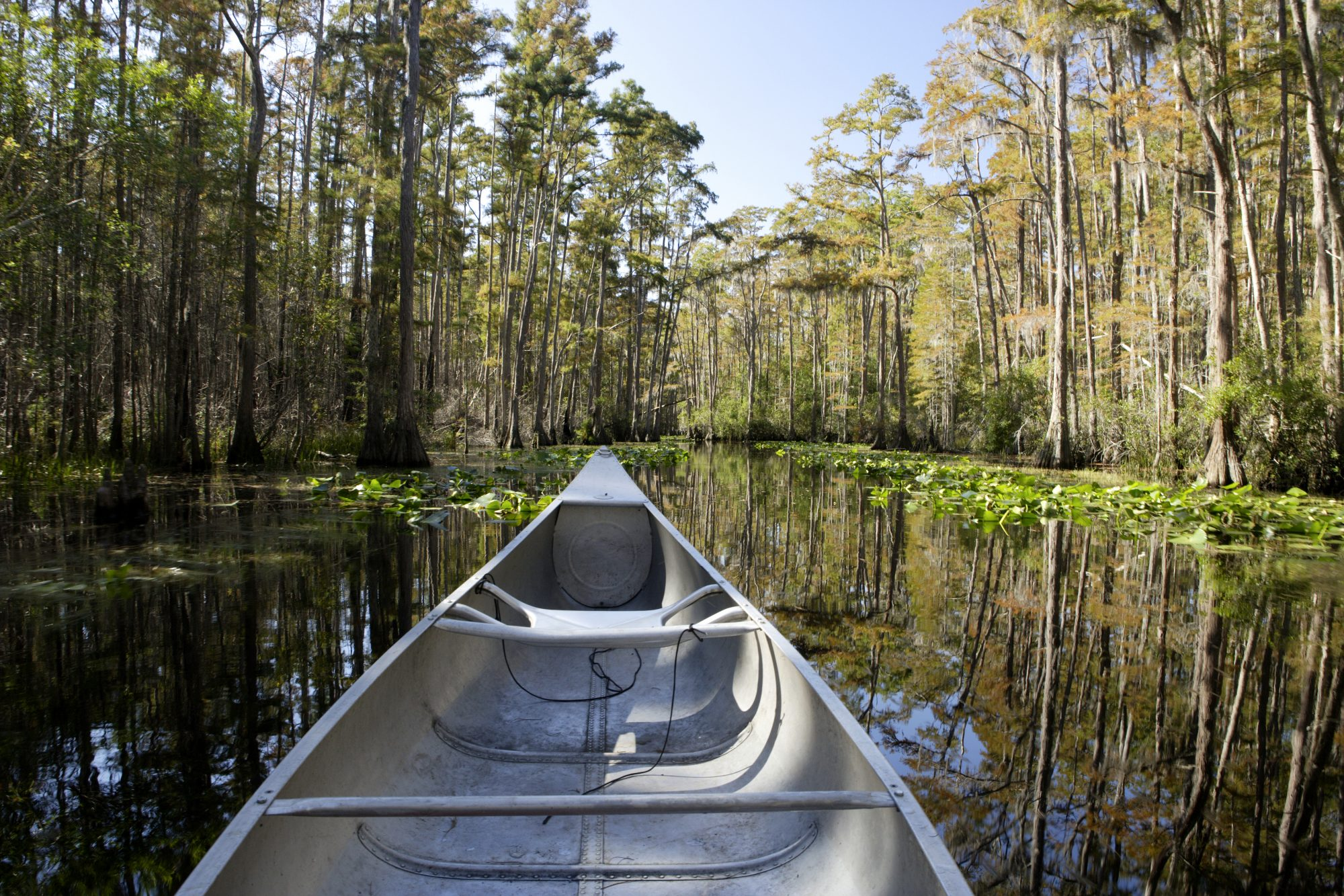 Southern Campgrounds Okefenokee National Wildlife Refuge, GA
