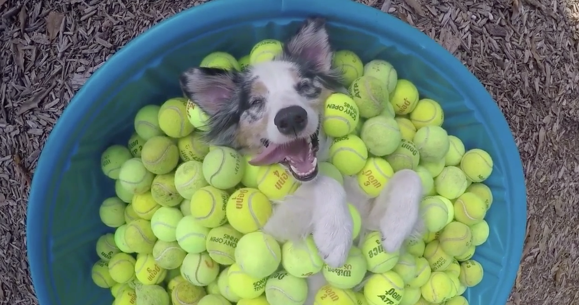2016 Pet Moments Tennis Ball Dog