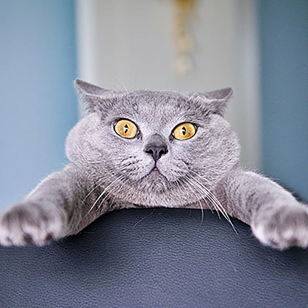 Funny Cat Holding On