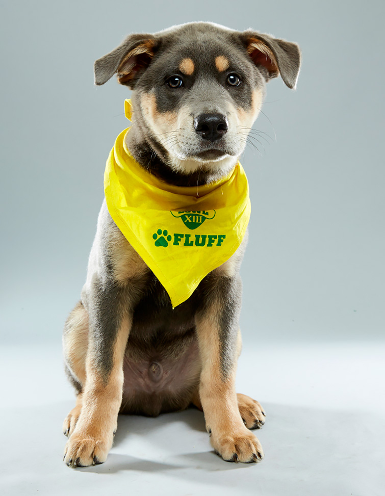 2017 Puppy Bowl: Nyquist the Puppy