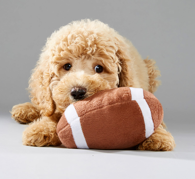 2017 Puppy Bowl: Oliver the Puppy