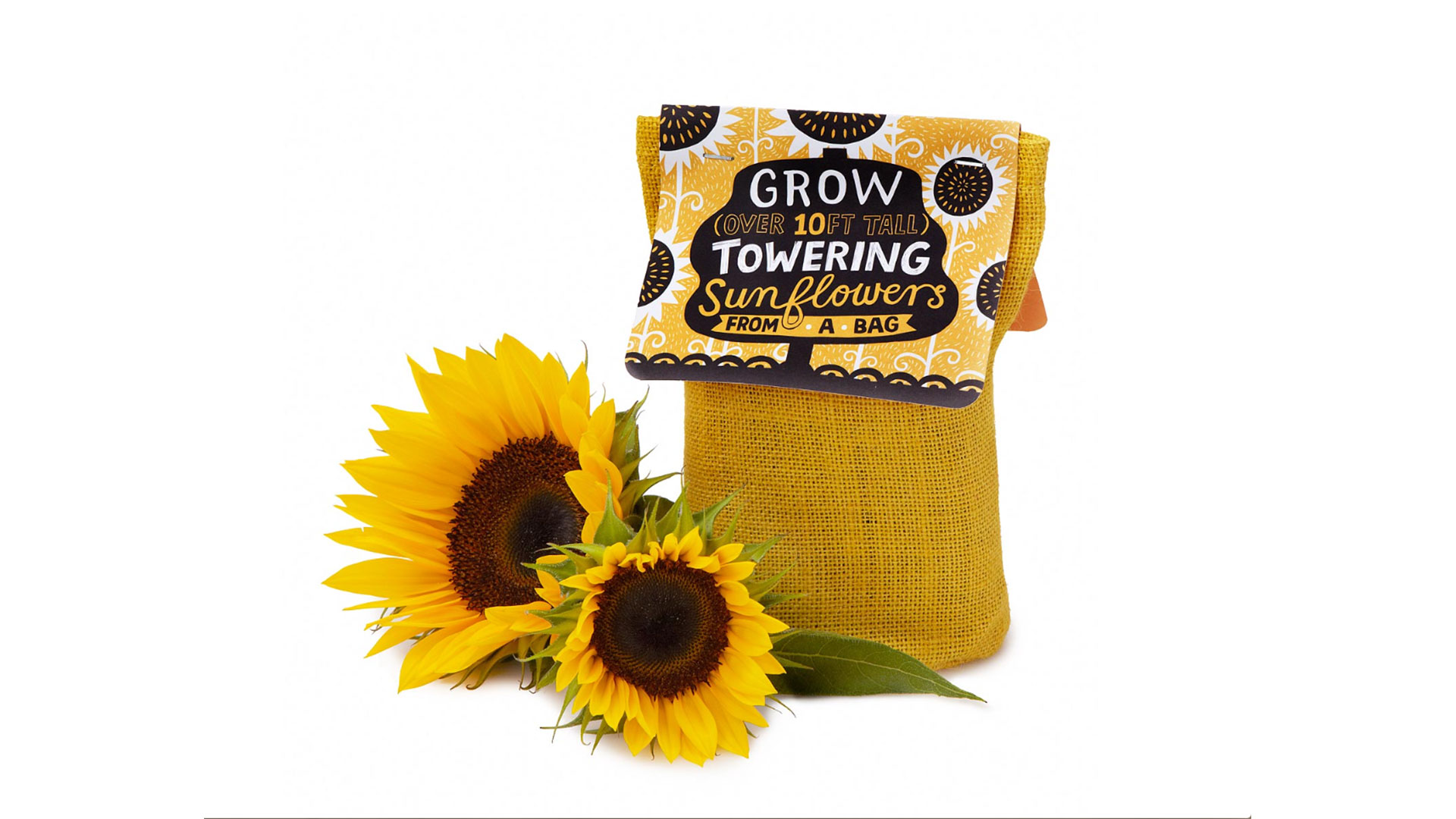 Sunflower In A Bag Growing Kit