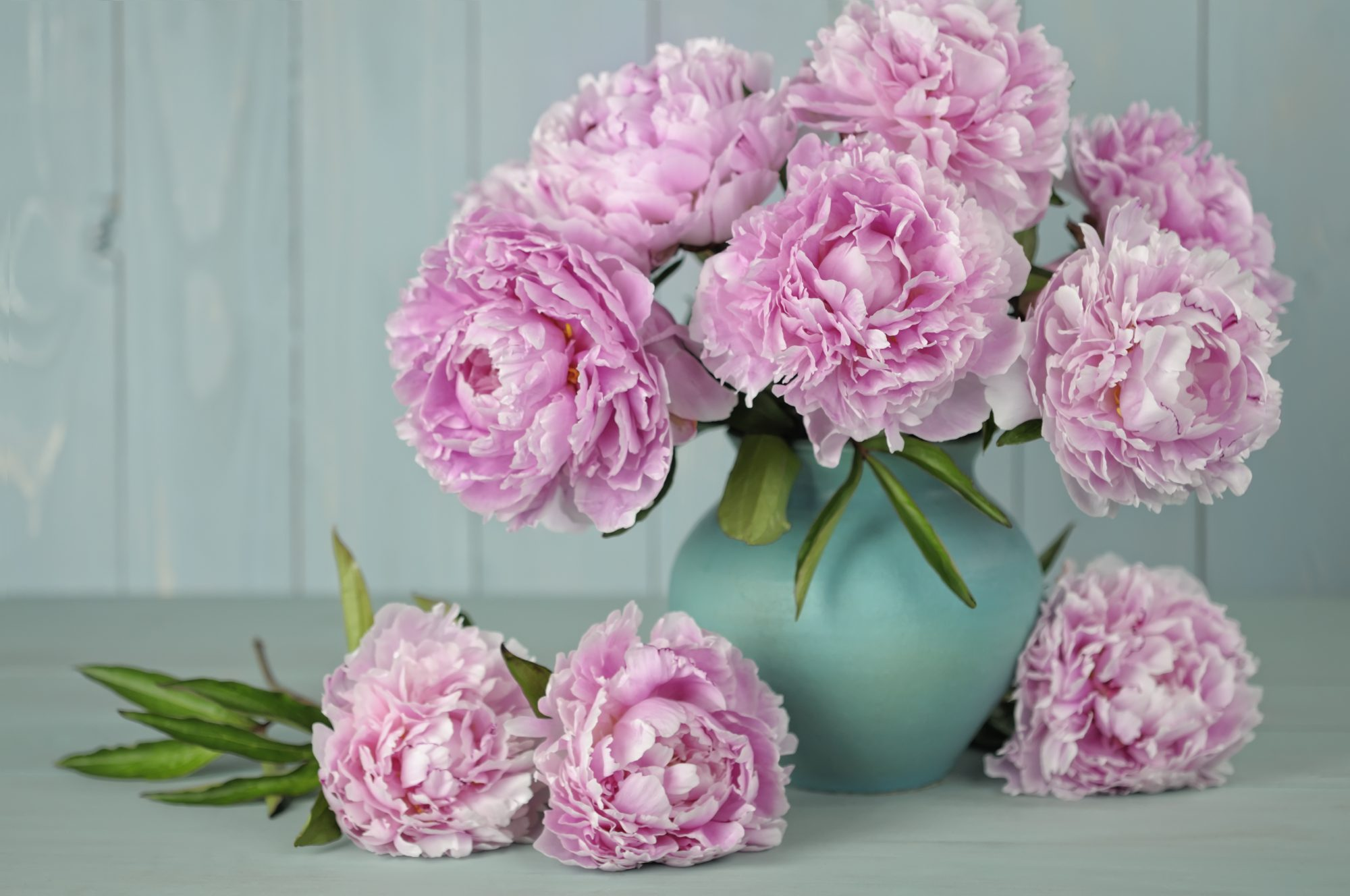 A Peony for Life? A Dream Come True