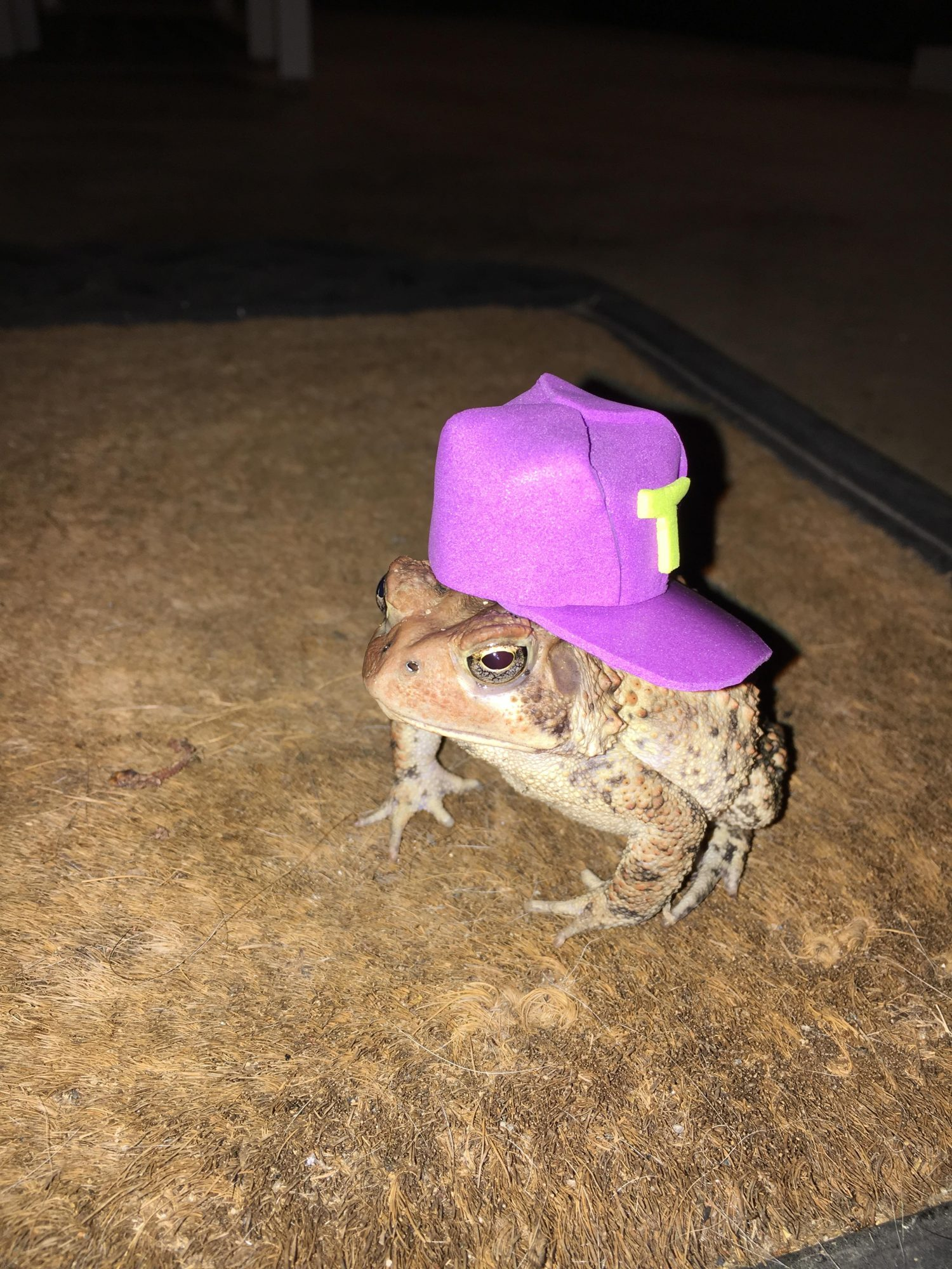 Toads with Hats Baseball Cap