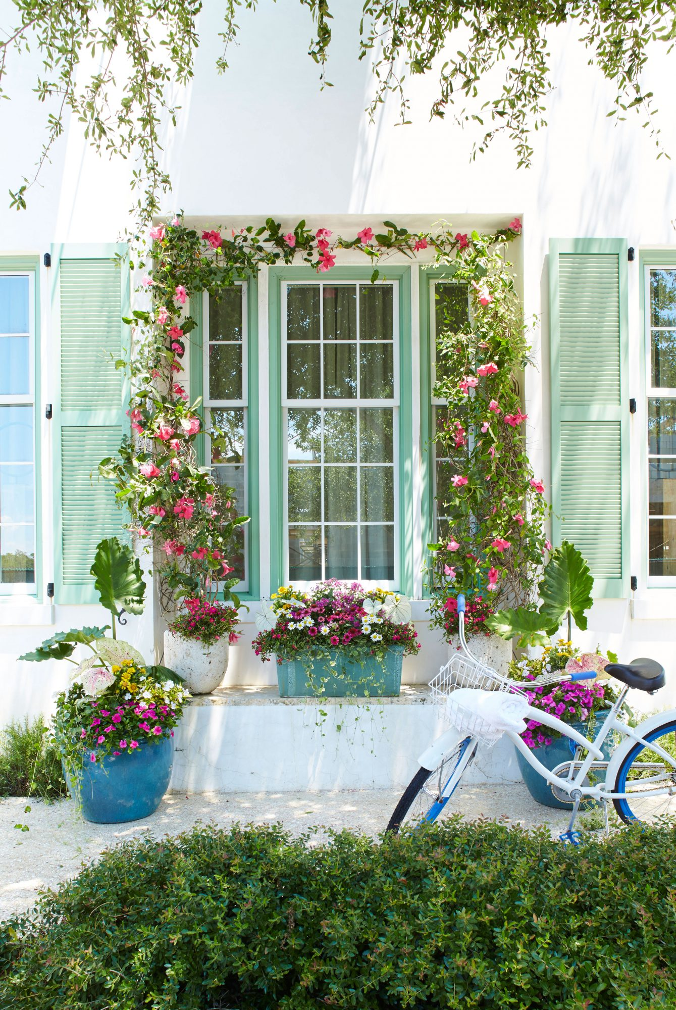 Green Shutter with Pink Flowers and Bicycle