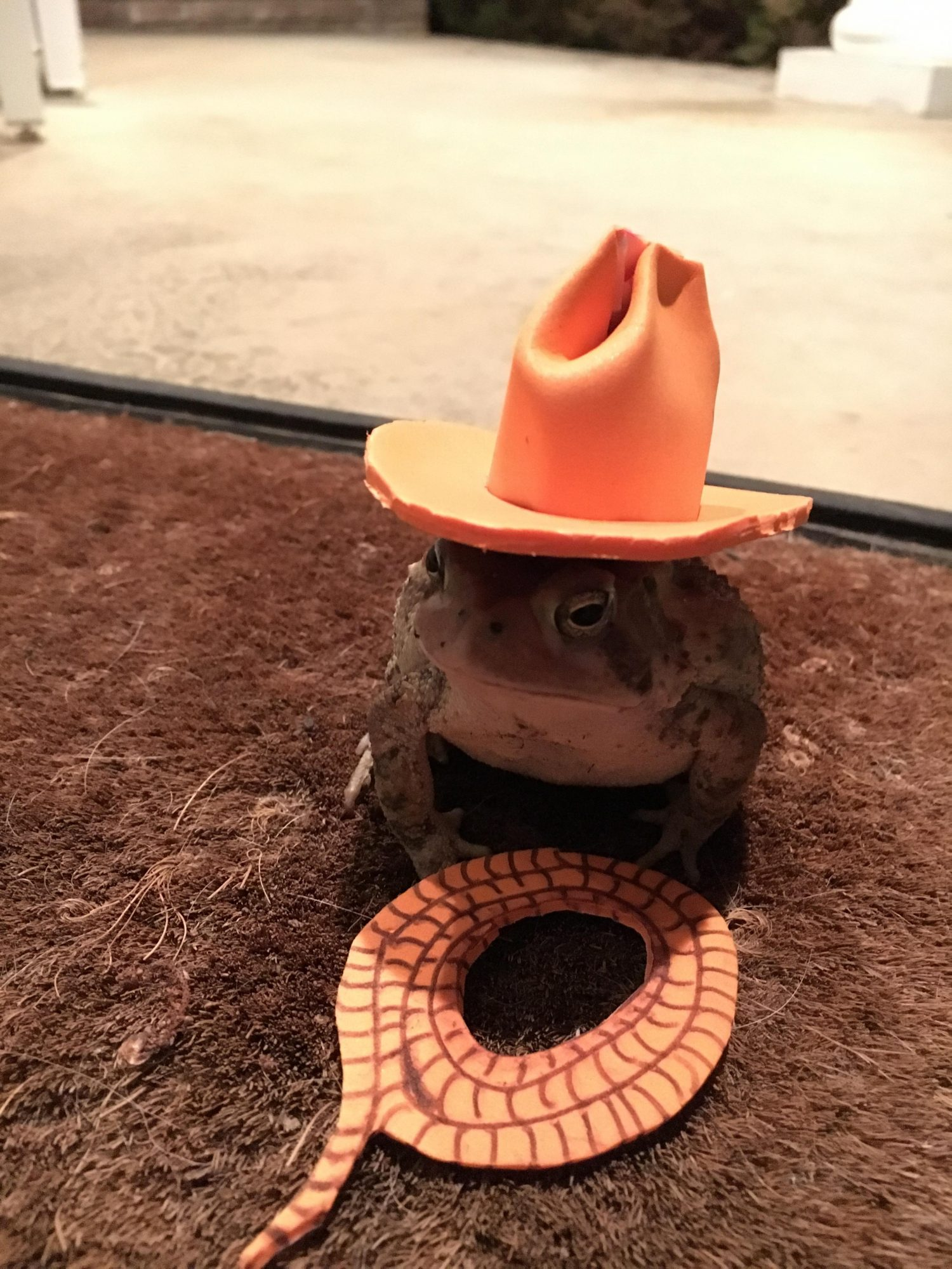 Toads with Hats Cowboy Hat