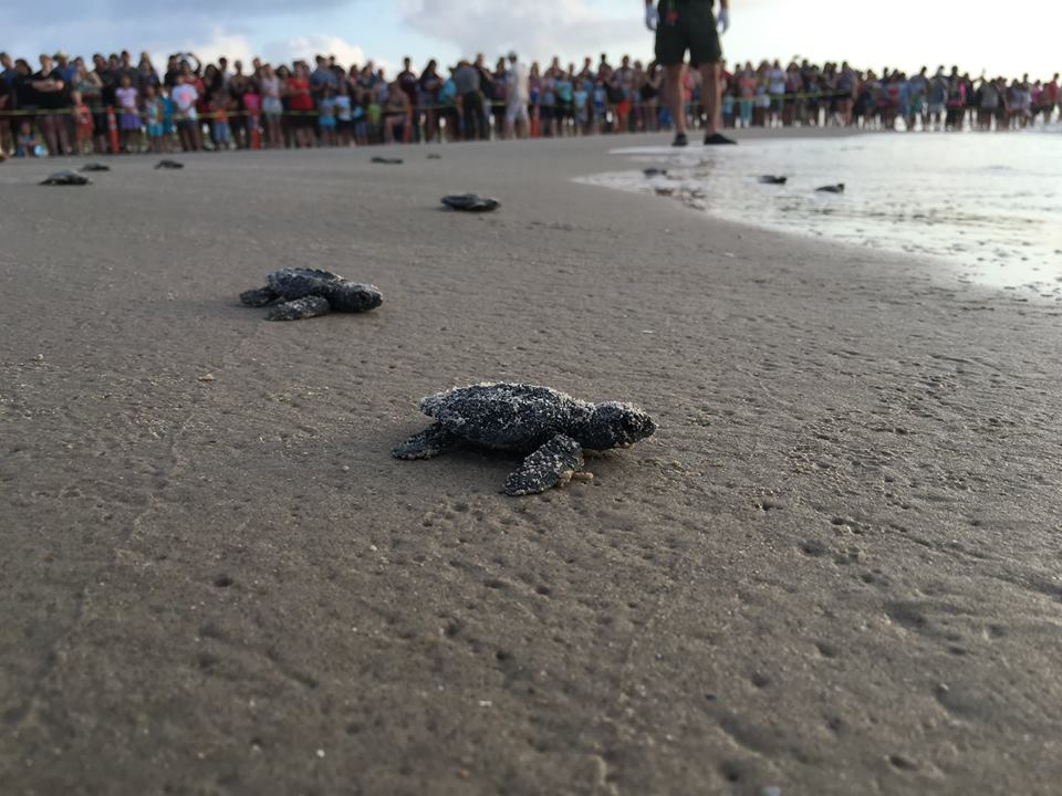 6. Watch a Sea Turtle Release on Padre Island