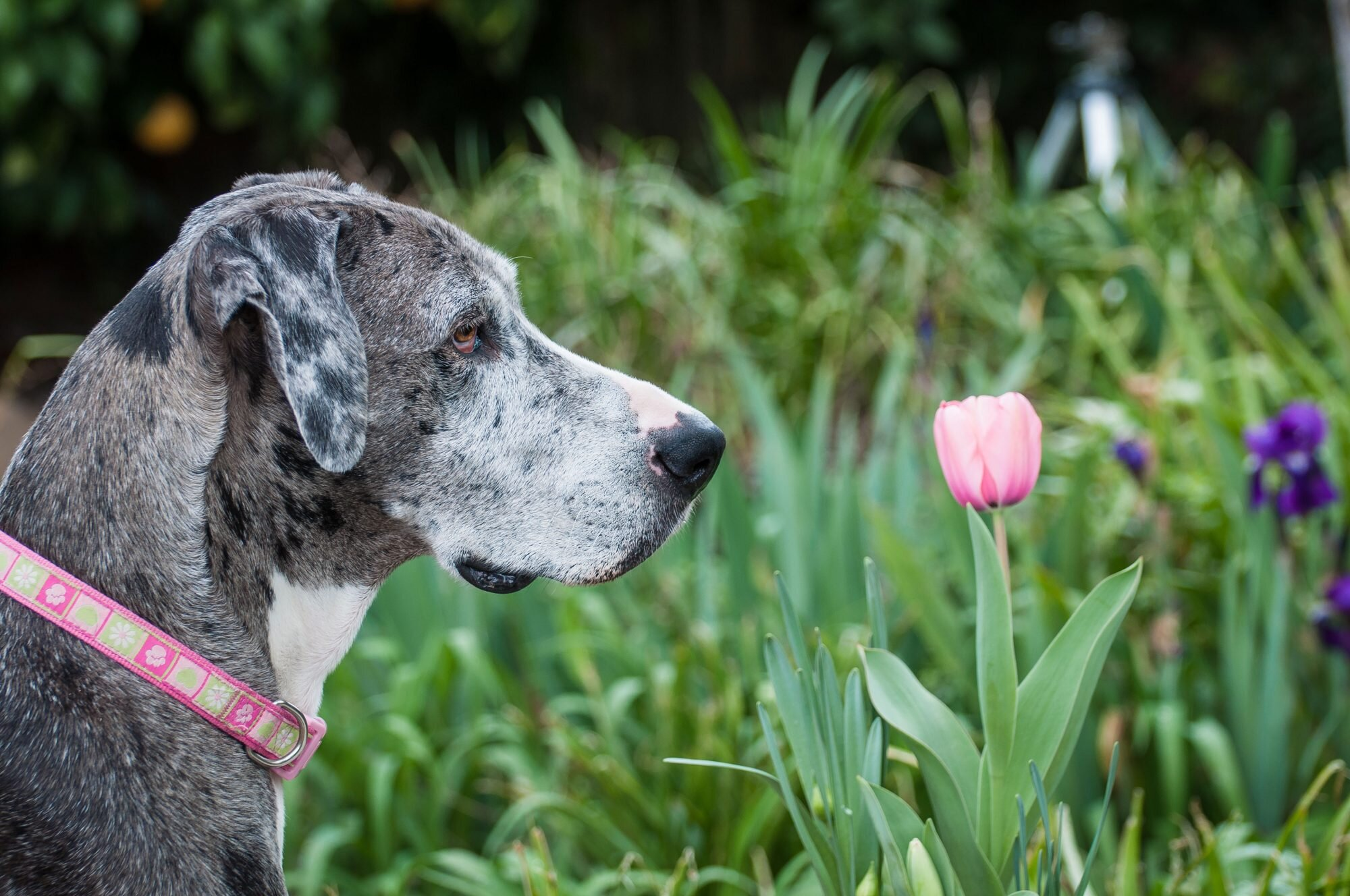 Best and Worst Flowers to Plant for a Pet-Friendly Garden