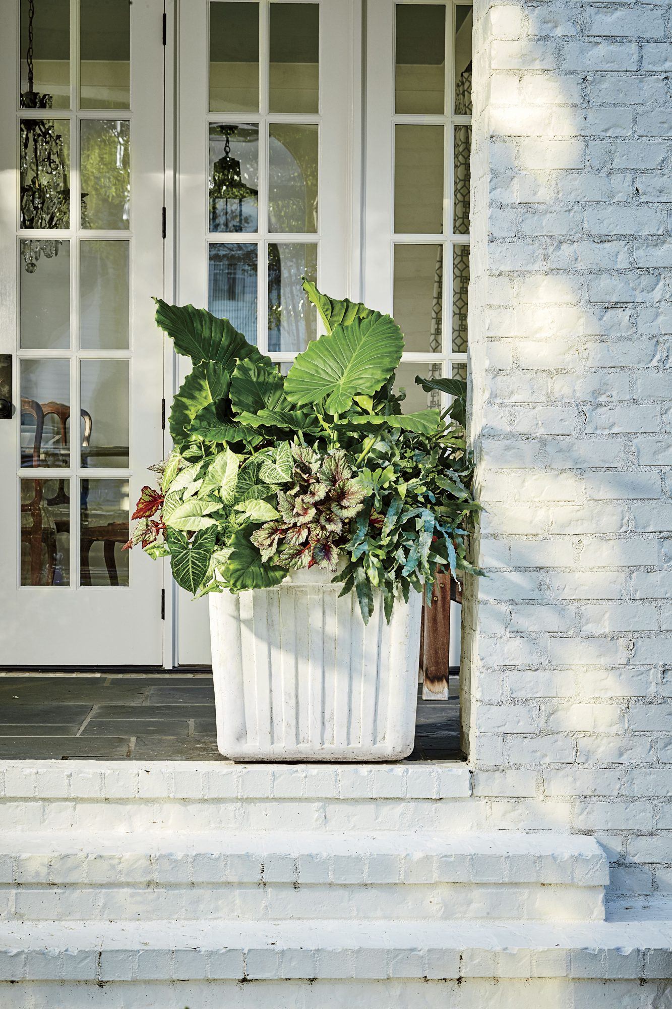 Shade Container with Green Plants