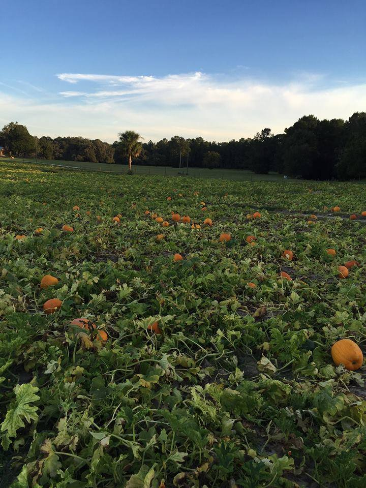 Best Pumpkin Patches in Every Southern State Florida