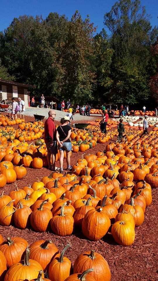 Best Pumpkin Patches in Every Southern State Georgia