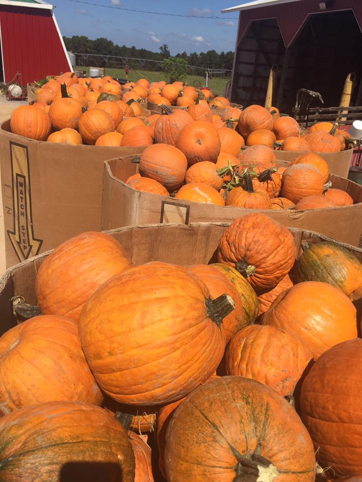 Best Pumpkin Patches in Every Southern State Mississippi
