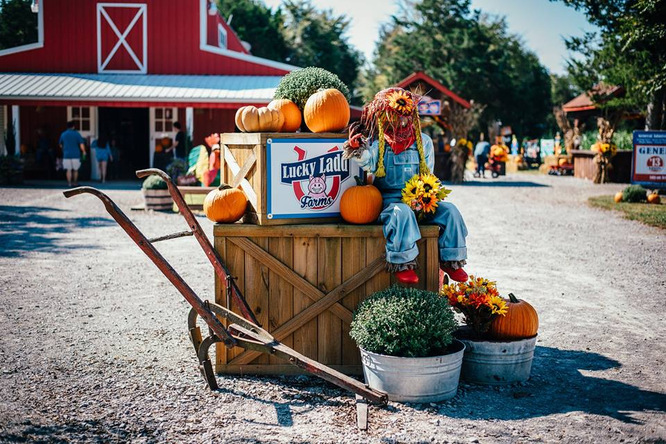 Best Pumpkin Patches in Every Southern State Tennessee