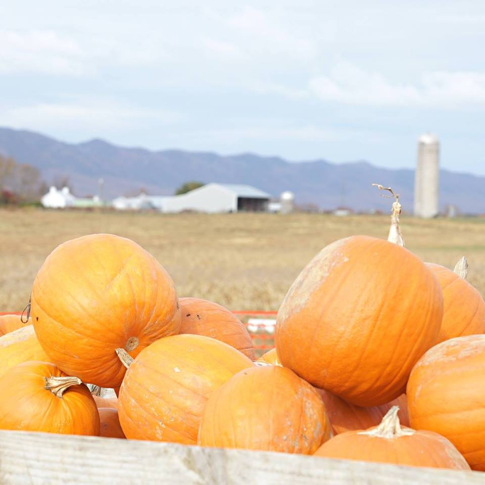 Best Pumpkin Patches in Every Southern State Virginia