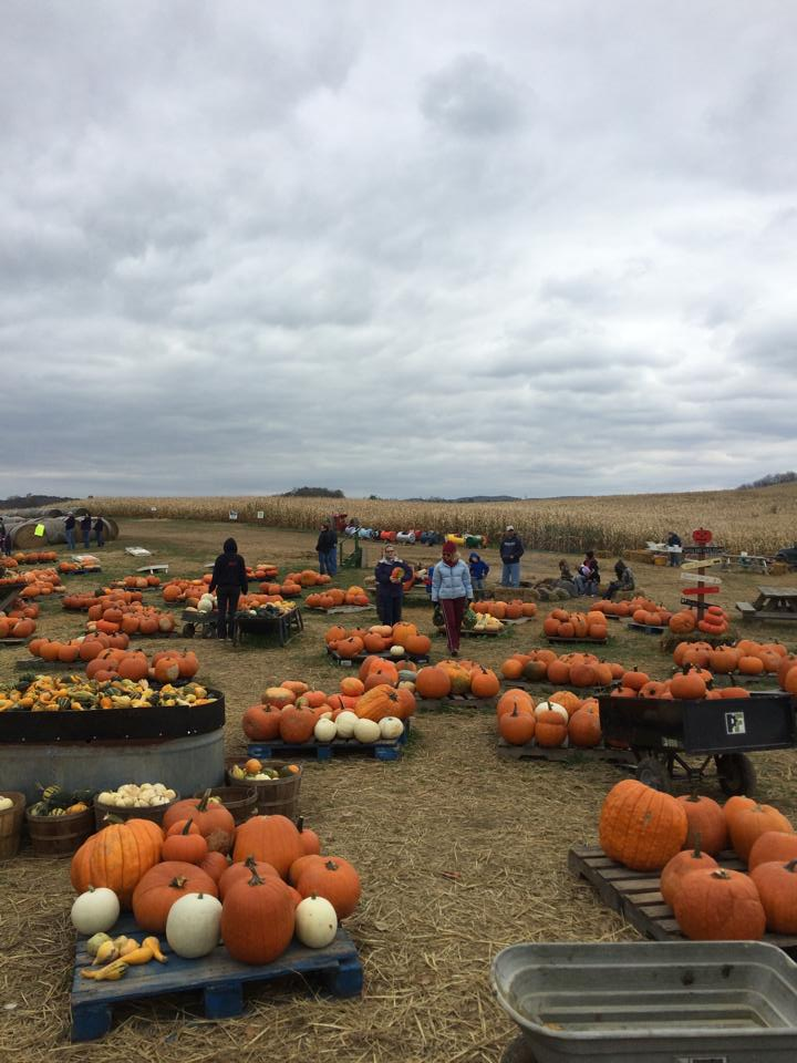 Best Pumpkin Patches in Every Southern State West Virginia