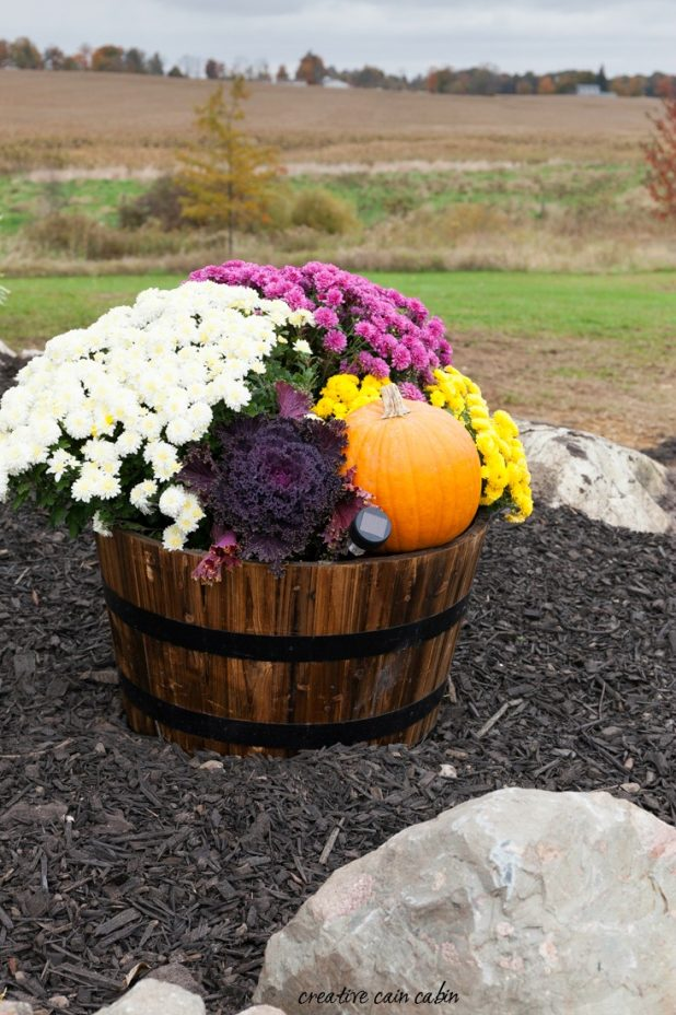Incredible Ways to Decorate with Mums Use Unconventional Containers