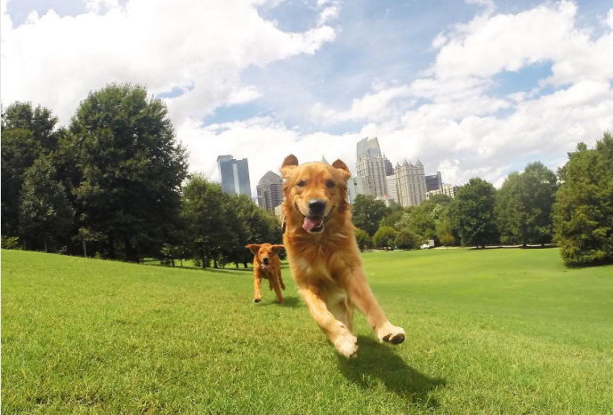 Dog in Piedmont Park Running