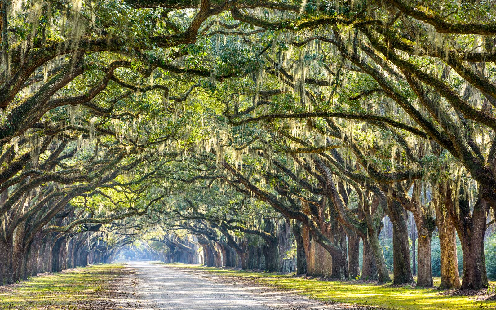 Savannah, Georgia oak tree lined road at historic Wormsloe Plantation.
