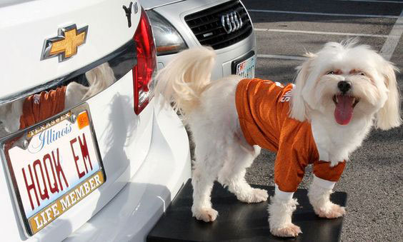 """Illinois (by way of Texas): """"Hook 'Em!"""""""