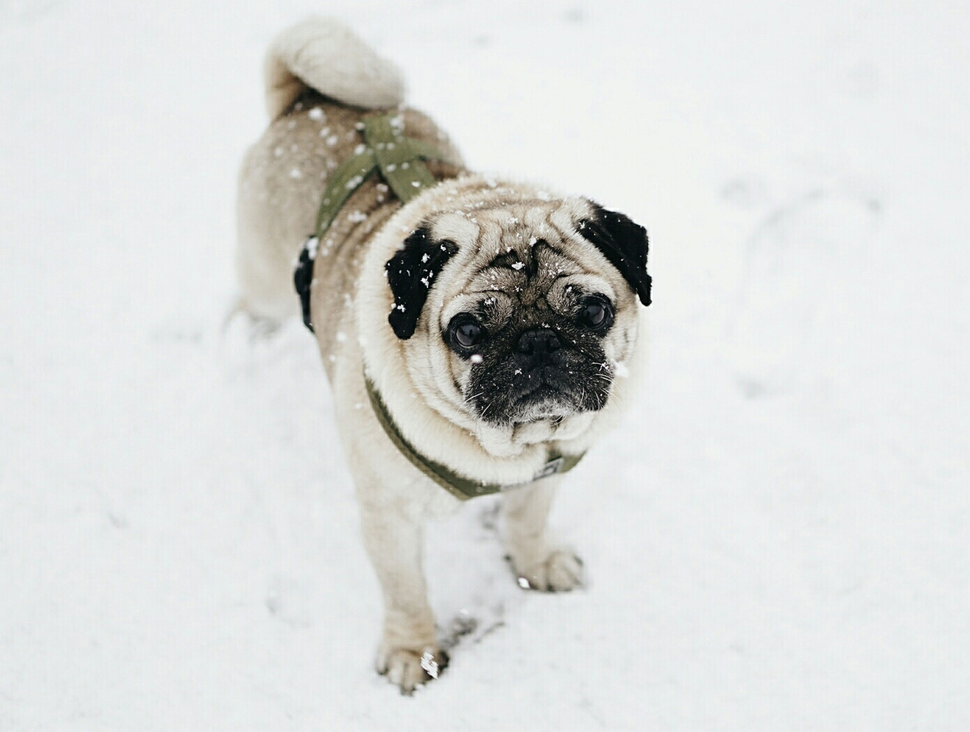 Ahead of This Weekend's Storm: How to Keep Your Pet Safe in Sleet, Snow, Ice and Freezing Temperatures