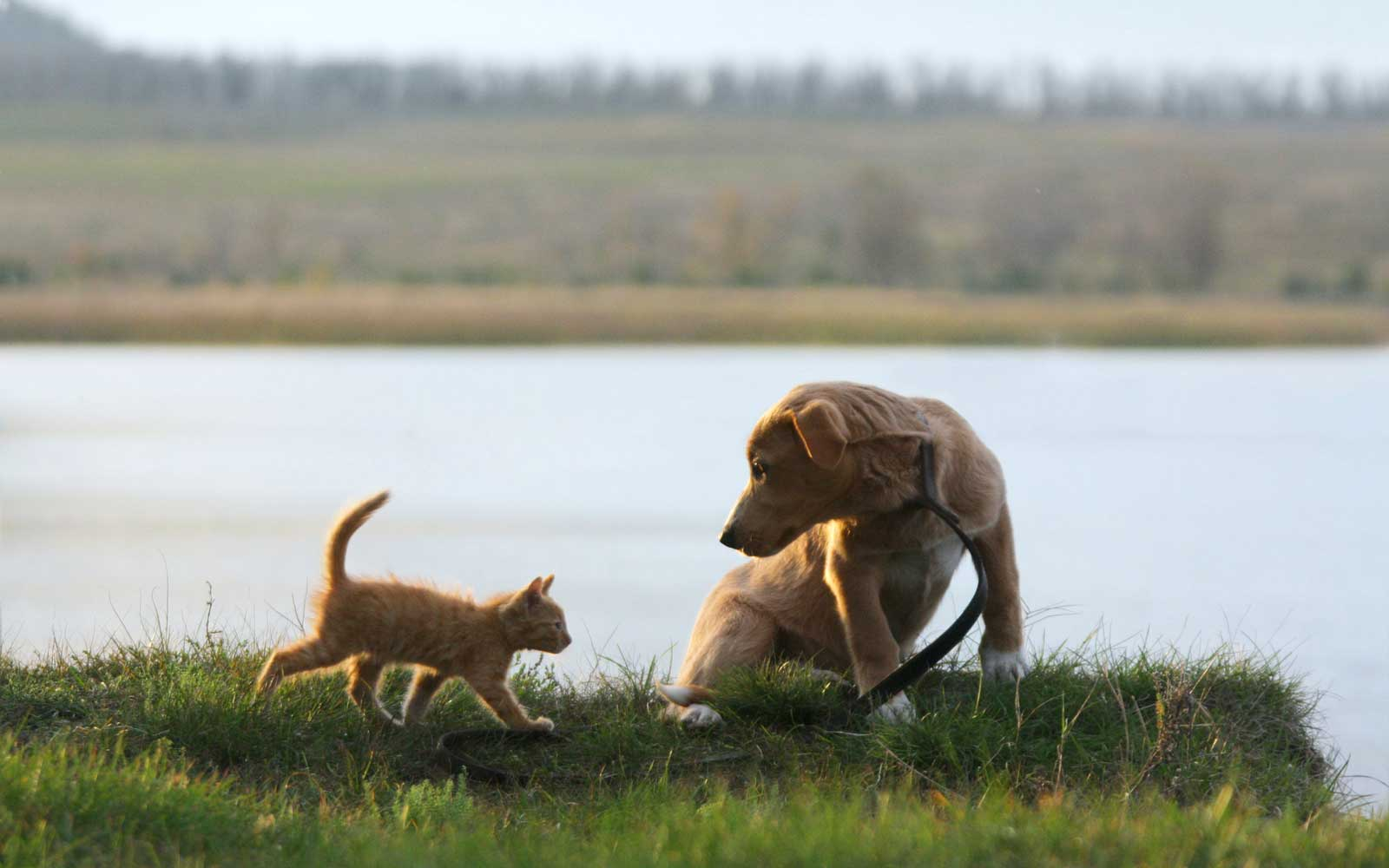 Dog and cat together on the lake shore