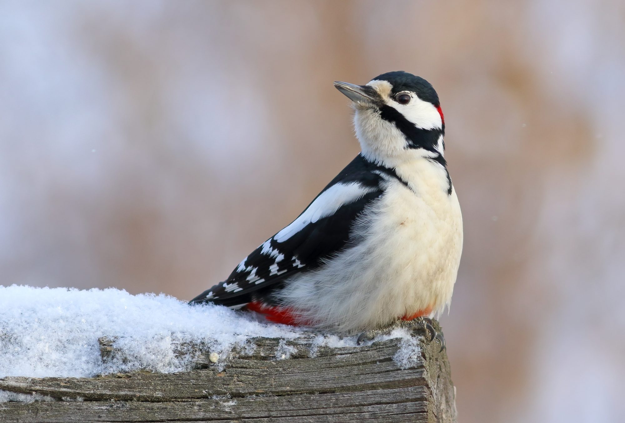 Cold weather birds