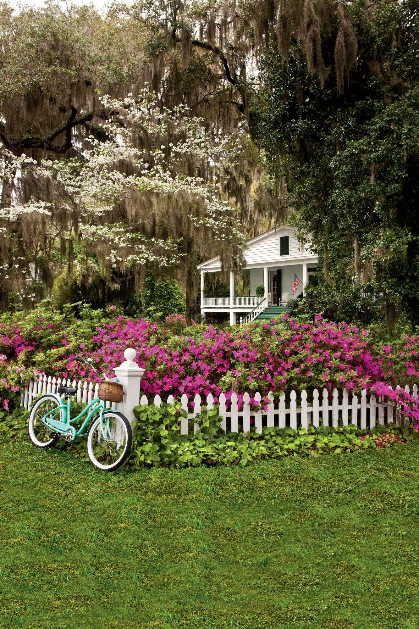 White Picket Fence with Pink Azaleas Blooming and a Teal Bike