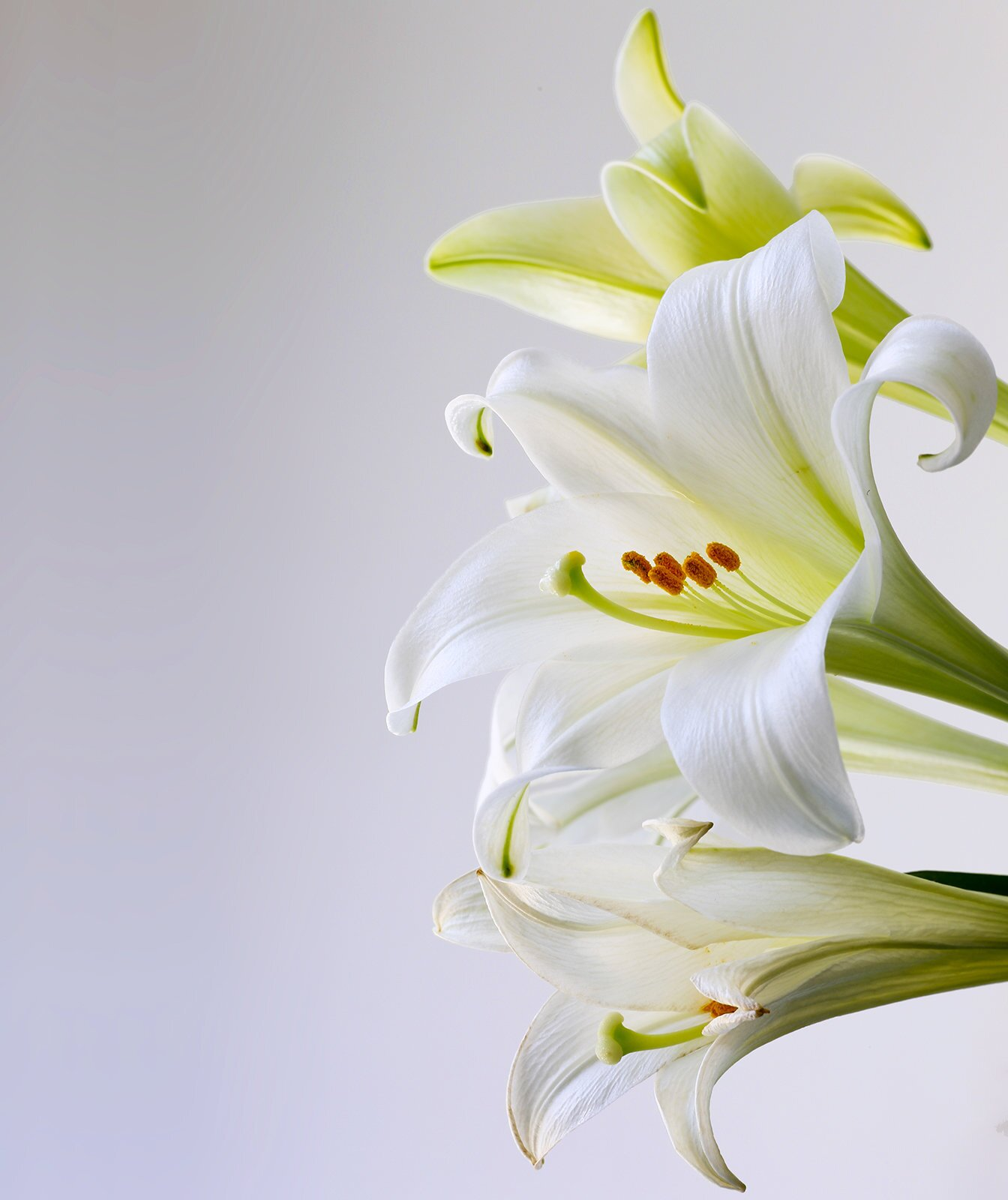 Simple DIY Paper Easter Lily Tutorial and Pattern to Make Today! | 1600x1344