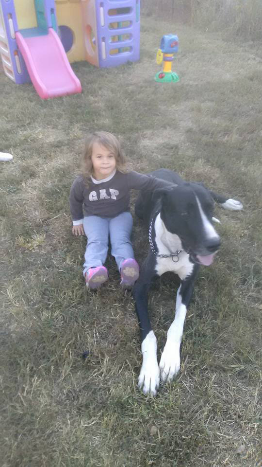Great Dane Alerts and Saves Family From Giant Fire Minutes Before House Goes Up in Flames great-dane-5