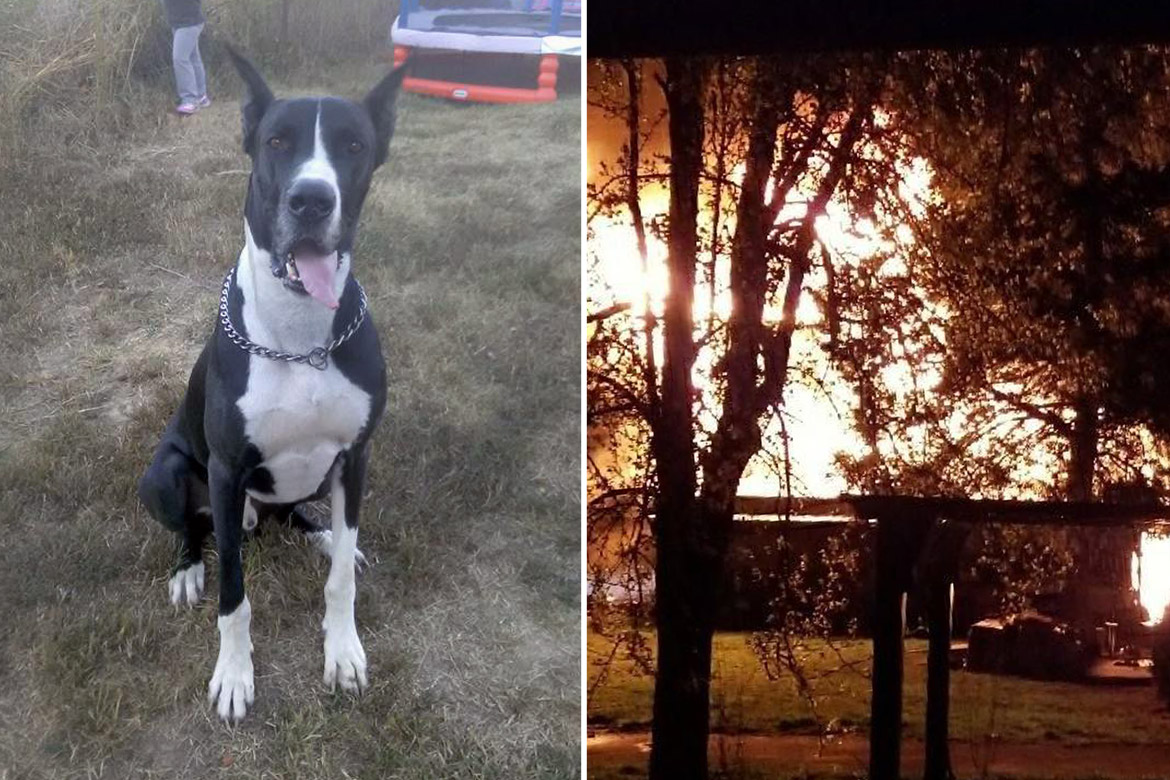 Great Dane Alerts and Saves Family From Giant Fire Minutes Before House Goes Up in Flames