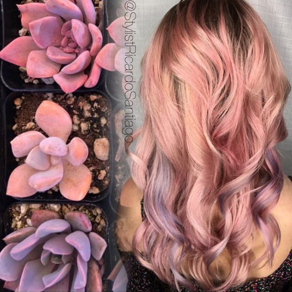 Rosy Hues with Purple Ribbons