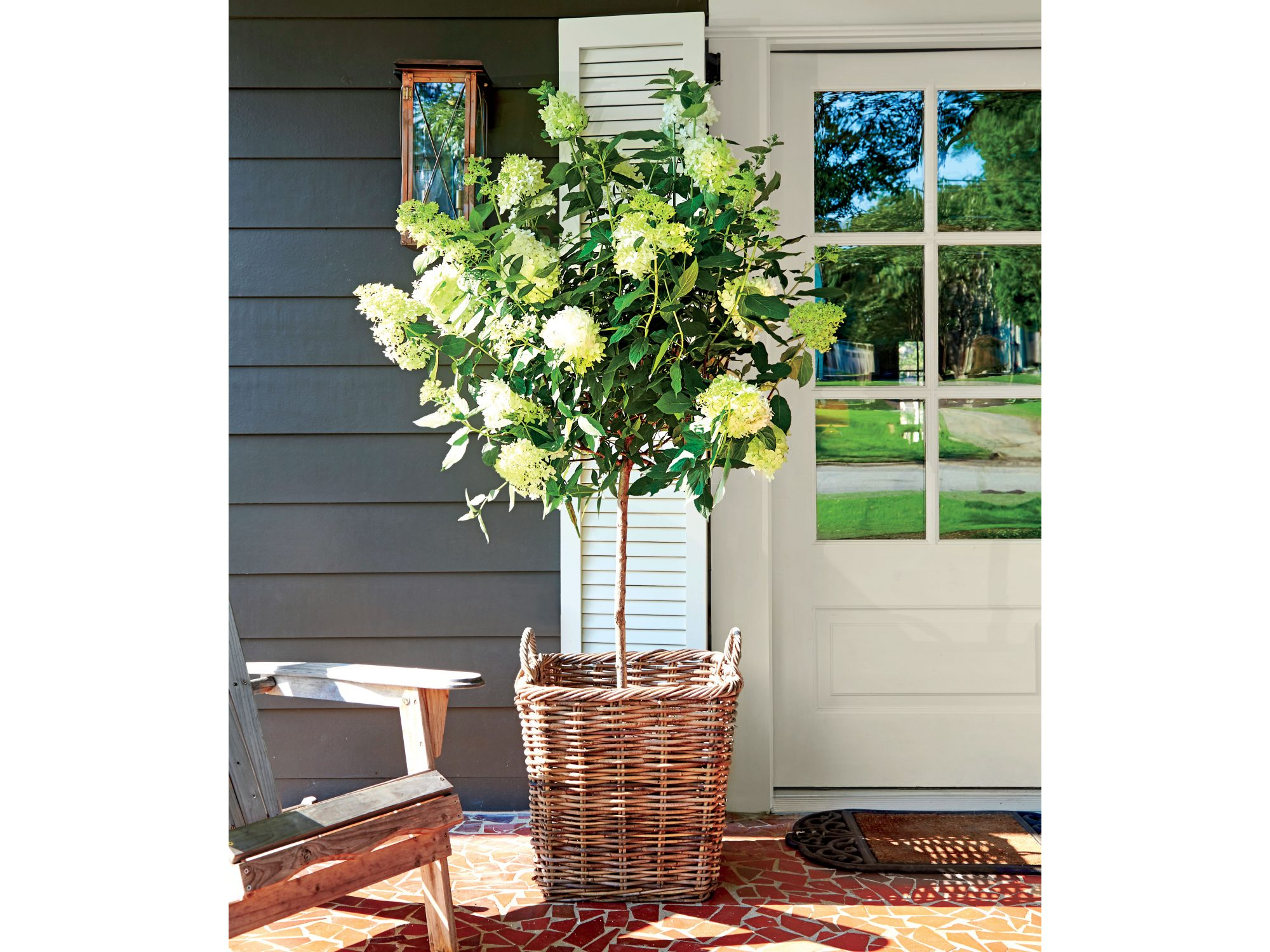 Hydrangea Tree in Basket